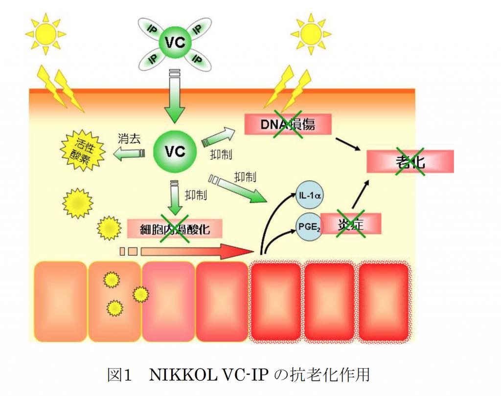 VCIPの抗老化作用