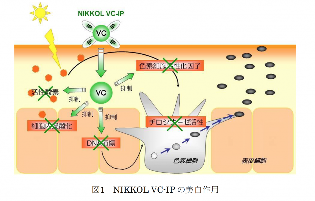 VCIPの美白効果